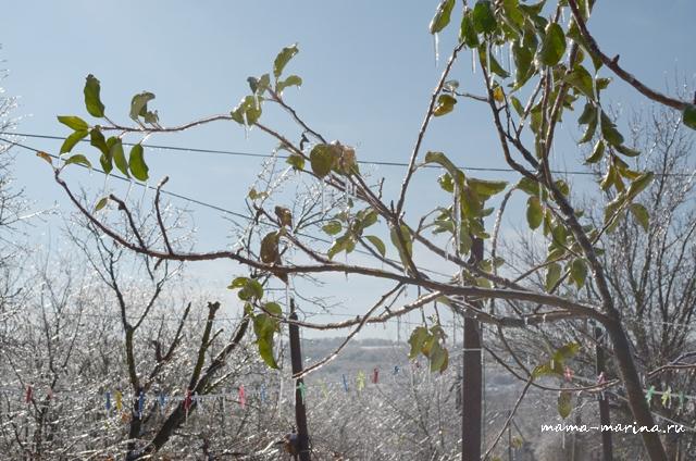 дерево и лед