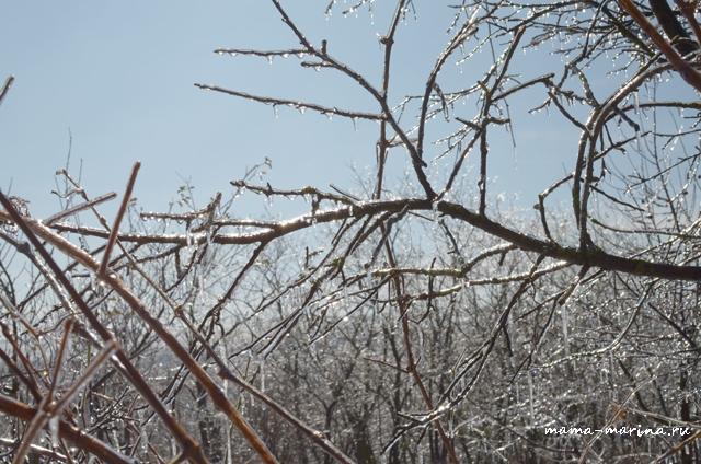 и еще деревья во льду