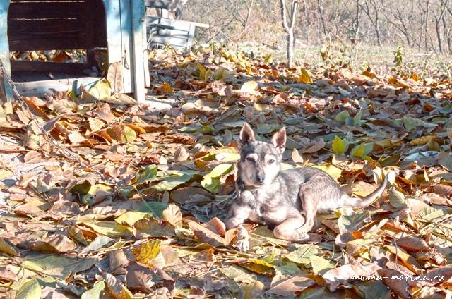 пёс на ковре из листьев