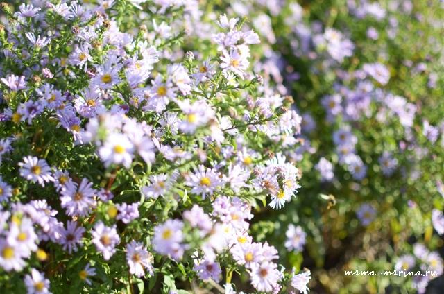 стойкие к заморозкам цветочки