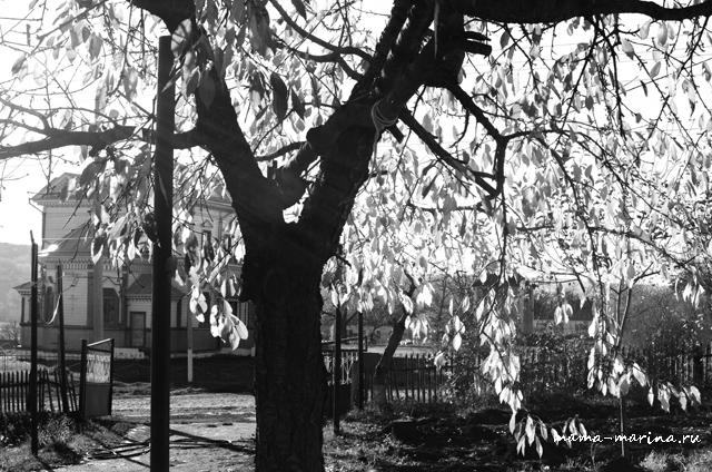 в контровом свете, монохром - листва кажется прозрачной