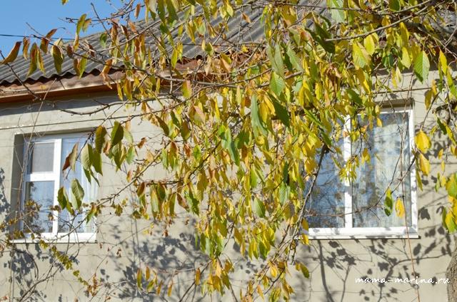 вид на дом сквозь листья